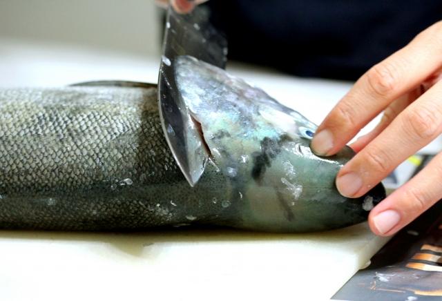 魚 血抜き